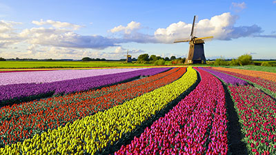 Holland, blomsterresa 6 dagar